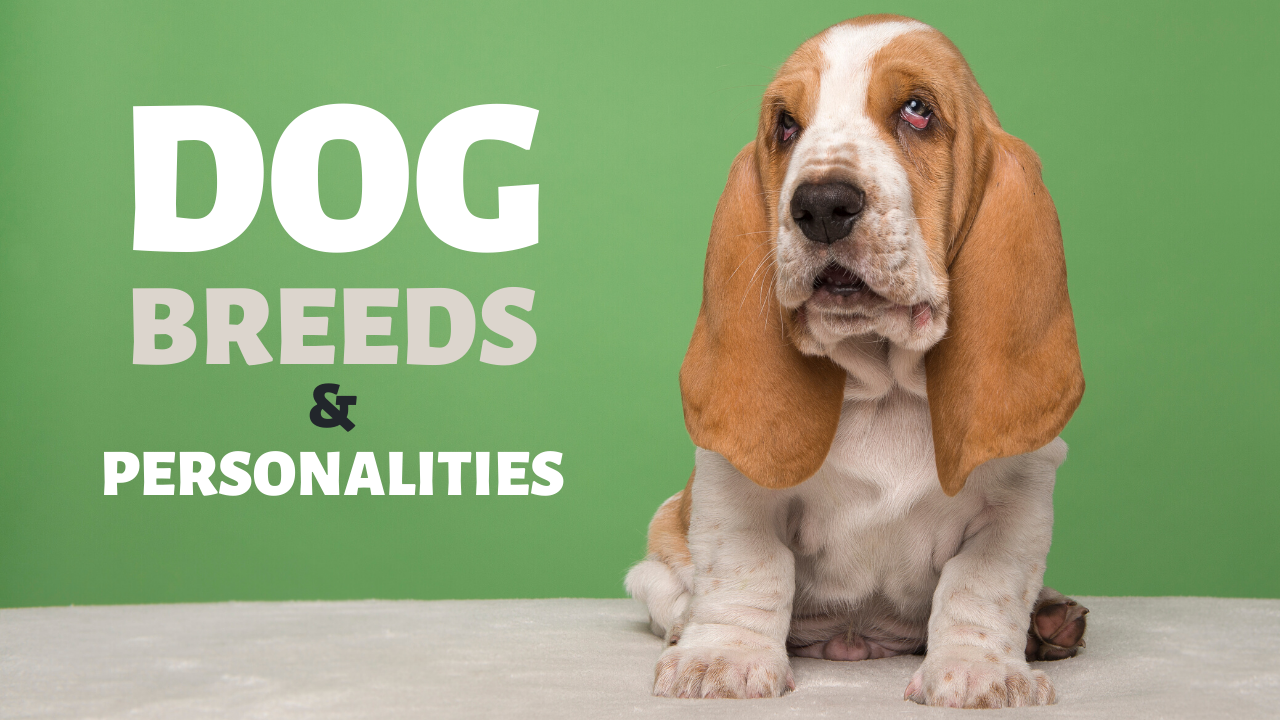 Dog Breeds and Personalities - Which dog is right for me